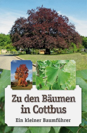 Zu den Bäumen in Cottbus. Ein kleiner Baumführer
